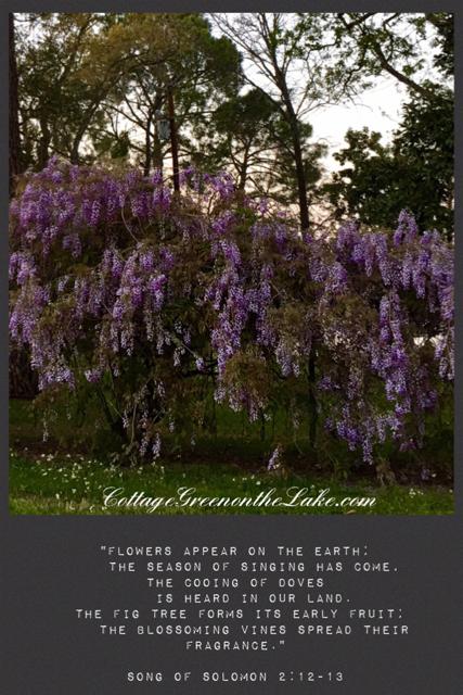 wisteria scripture