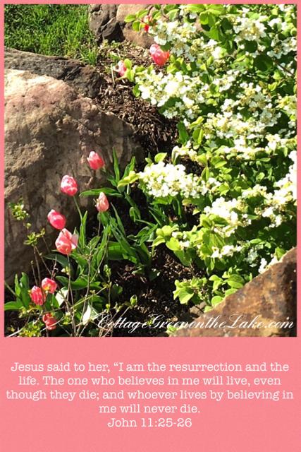 tulip scripture.png