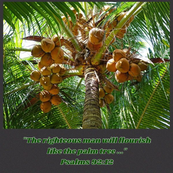 palm tree scripture