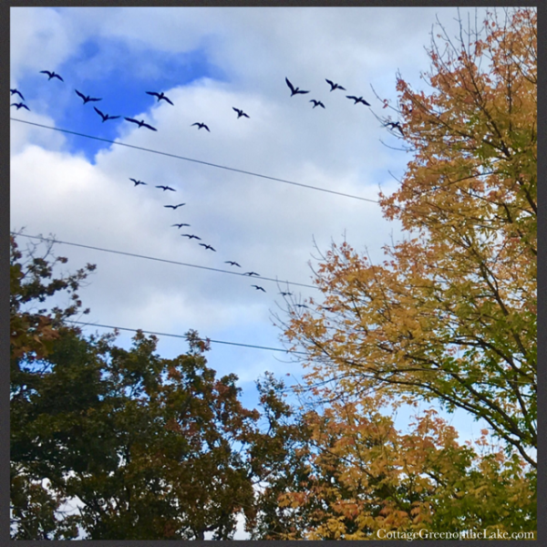 ash tree geese