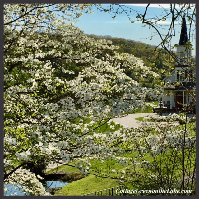 white blossoms and steeple