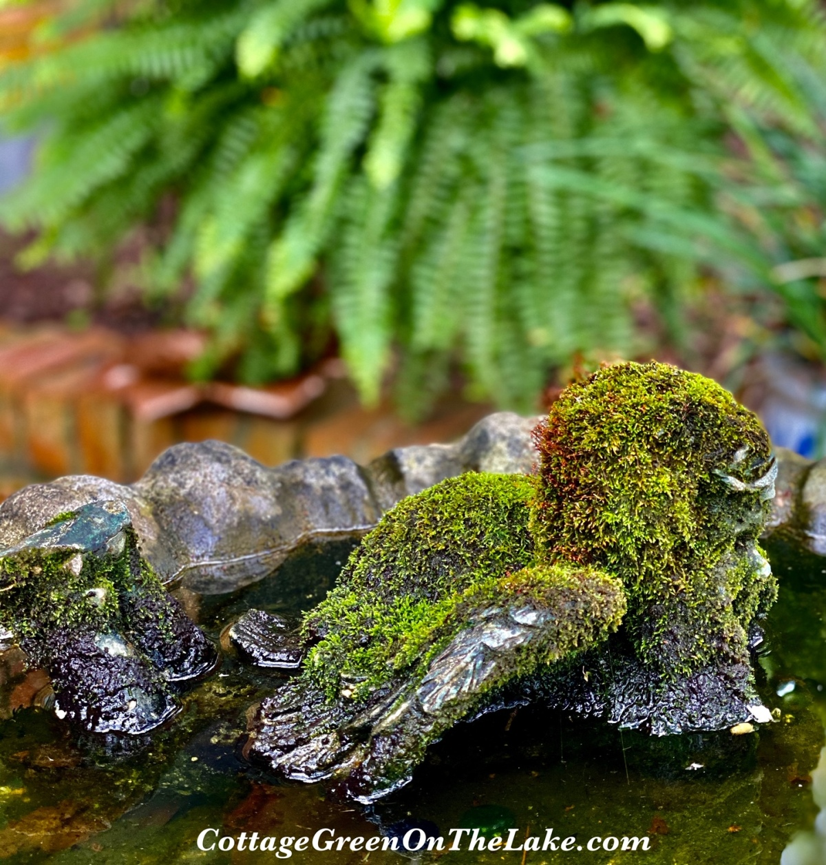 In the Cottage Greenhouse…How to Propagate and Transplant Moss